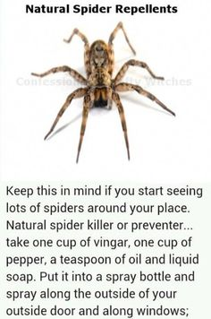 Do These 6 Things And Never See A Spider In,Your Home Again diy diy ideas easy diy how to interesting remedy tutorials life hacks life hack easy hacks cleaning hacks home hacks good to know viral repellant