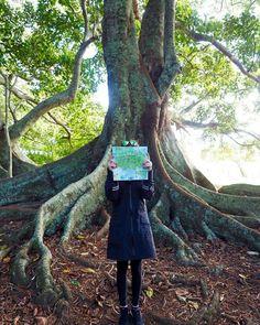 Norfolk Island Australia. #loveletters #love #life #nature #landscape #travel #Australia #naturephotography #naturelovers #photooftheday #photography #travelphotography #traveller #travelgram #instagood #instadaily #instaphoto #instanature #instatravel #instacool #adventure #happiness #fun #explore #wanderlust #motivation