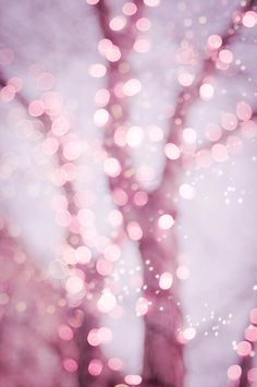 Pink sparkly fairy lights.
