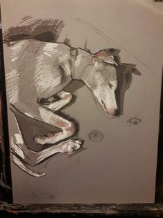 Whippet #drawing