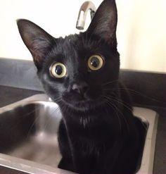 Foto: Non vorrai mica farmi il bagno...vero?