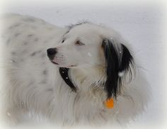 lily in snow