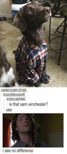 Puppy in flannel = Sam Winchester