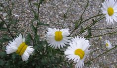 Flores mutantes