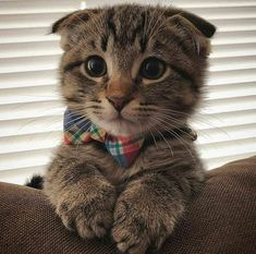 Cute kittens are fun Cute Cats And Kittens, I Love Cats, Kittens Cutest, Cute Baby Animals, Animals And Pets, Funny Animals, Funny Kittens, Animals Images, Cute Cat Breeds