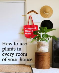 how to use plants in every room, low light plants, plants in bedroom, plants in kitchen, plants in entry Kitchen Plants, Low Light Plants, Bedroom Plants, Hip Hip, Low Lights, House, Plants In Bedroom, Haus, Home
