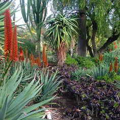 City Gardening Aloe vera - A plant that is water-wise and has useful health benefits - Succulents Garden, Garden Plants, Garden Ideas South Africa, Aloe Vera, Jungle Gardens, City Gardens, African Jungle, African Plants, Dry Garden