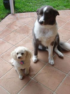 Short Medium Term From May 13, 2013 For I need pet care for: Dogs    House Sitter Needed for Youngguns2  Location Wurtulla, Sunshine Coast, Sunshine Coast   Sunshine Coast,QLD Australia Availability May 13,2013  For | Short Medium Term  Not a member? Join today to contact homeowner Youngguns2