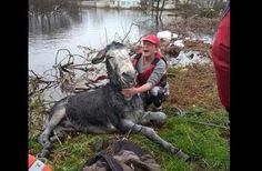Mike der Esel ist sichtlich glücklich über seine Rettung. Foto: Screenshot Facebook / ahar.ie