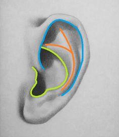 Shapes of the ear 1 Zeichnung von Menschen How to draw an ear – 5 easy steps Sketch Design, Sketch Art, Drawing Sketches, Pencil Drawings, Art Drawings, Drawing Tips, Drawing Faces, Drawing Ideas, Sketching