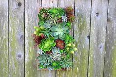 Faux Succulent Arrangements, Succulent Stems, Air Plant by TheQueenBeesGarden Wall Hanging Arrangements, Succulent Arrangements, Succulent Wall, Faux Succulents, Air Plants, Garden, Crafts, Vintage, Succulent Wall Diy