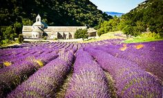 Provence Guide: Gordes Holiday Rentals, B, Hotels, Restaurants, Travel & Activities