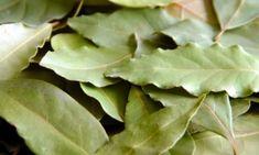 Detox, Plant Leaves, Nature, Plants, Fresh, Fitness, Syrup, Lavender, Naturaleza