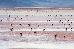 Salar de Uyuni.  Se é para lugares inusitados que se quer ir, uma excelente opção fica na Bolívia. O Salar de Uyuni é um gigantesco deserto de sal que se estende por um território que abriga vulcões ativos e gêiseres, além de lagoas de águas termais e um cemitério com ossadas de antigos povos da região. No começo do verão, o local é habitado por diferentes espécies de flamingos, formando uma bela paisagem.