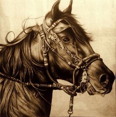 Cavalo by ~diogenesdantas Traditional Art / Drawings / Animals Horse Drawings, Realistic Drawings, Animal Drawings, Art Drawings, Pencil Drawings, Pencil Art, Graphite Drawings, Graphite Art, Cowboy Art