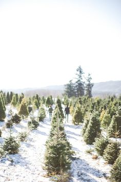Trees christmas trees and white christmas trees on pinterest
