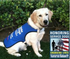 September is National Service Dog month at Petco. Please RE-PIN http://www.naturalbalanceinc.com/national-service-dog-month.aspx Please Re-Pin