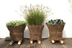 Äste Gras Blumentopf
