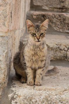 Cat ❤ 778:  Le chat de Jérusalem (by Erminig Gwenn) #cat #kitten #animal
