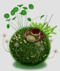 Image result for kokedama tutorial
