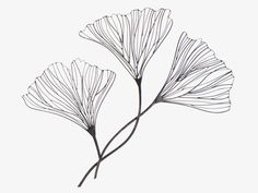 Metal Floral Wire wall decor These are Ginko leaves - my very favorite. Plate Drawing, Leaf Drawing, Doodle Inspiration, Blatt Tattoos, Art Du Fil, Plant Illustration, Contemporary Artwork, Iron Wall, Leaf Art