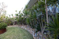 Draceana marginata mulched with nepean random pebble. Frangipani in mild steel cylinder within lawn. Palm Beach, NSW Australia Anthony Wyer + Associates www.anthonywyer.com