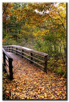 Bridge to Autumn (by Craig Sterken Photography).