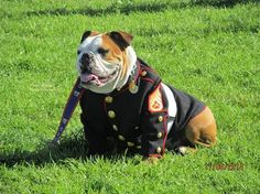♥ Baggy Bulldogs ♥  More Army and Navy Bulldogs  http://baggybulldogs.wordpress.com/2014/05/05/army-and-navy-bulldogs
