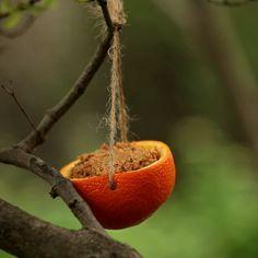 DIY Bird Feeder I'd rather fill it with regular bird seed but love the idea of reusing oranges! Homemade Bird Feeders, Diy Bird Feeder, Humming Bird Feeders, Squirrel Feeder Diy, Bird Suet, Bird Seed Feeders, Homemade Bird Houses, Garden Bird Feeders, Bird House Feeder