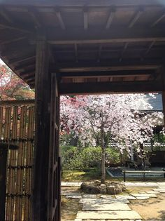 Sakura seen from the gate