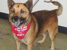 10/20/16 SL~~~09/17/16-Slater - URGENT - Richland County Dog Warden in Mansfield, Ohio - Adult Male Chow Chow/Cattle Dog Mix - I came to the shelter as a stray on 7/22/16. I am a happy and friendly guy. I don't know why I am here at the shelter and I hope someone is looking for me. Please, come on in, meet me, and see if I could be the guy for you.