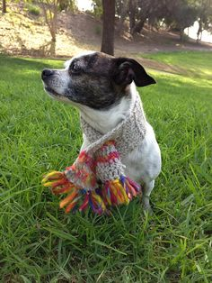 handmade beige and orange crocheted dog scarf by ChakaCoco on Etsy