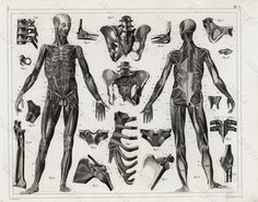 Original Antique Black and White Human anatomy by Printvilla4you