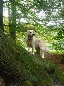 Train your dog to stay near you - off the leash