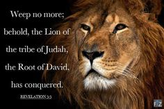 """And one of the elders saith unto me, Weep not: behold, the Lion of the tribe of Judah, the Root of David, hath prevailed to open the book, and to loose the seven seals thereof."" Revelation 5:5 ~Lion of the tribe of Judah!"