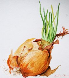 Onion Bulb- Original Watercolor Painting, via Etsy.