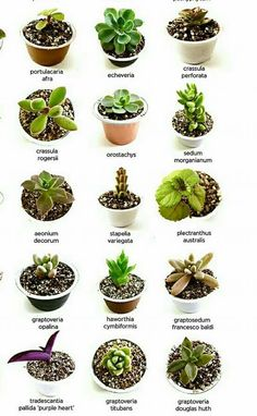 Nomes De Suculentas Cactus Names Succulent Ideas Types Of Succulents