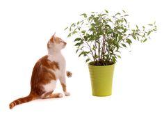 die 406 besten bilder von britisch kurzhaar katzen in 2019 british shorthair grey cats und pets. Black Bedroom Furniture Sets. Home Design Ideas