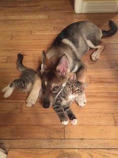inseparable buddies for life