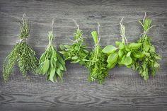 conserver-les-herbes-aromatiques