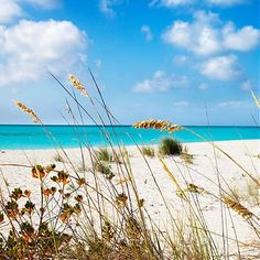 Aside from being one of the Caribbean's most desired tourist destination, Turks & Caicos are home to the world's most breathtaking beaches. The views are incredible and the coral reefs are as vibrant as they will ever be.