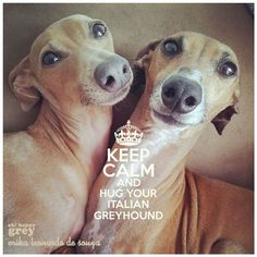 Keep calm and hug your greyhound...and if you throw in a few hounds kisses, they're OK with that, too!