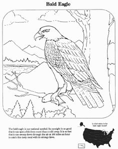July 4th Coloring Pages The American Eagle Coloring Page Sheets