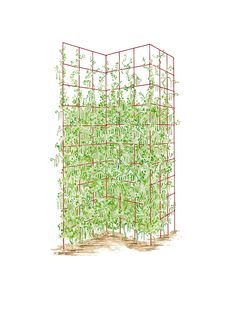 Three Panel Trellis -- giving this a try for my vines that are growing along a new fence.