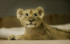 http://data.whicdn.com/images/14592769/Really-cute-animals-pictures-3_large.jpg