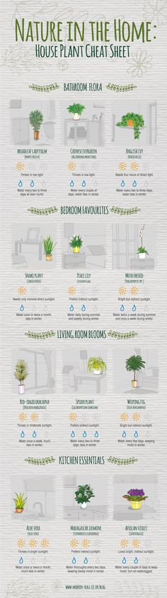 Never question how much sunlight your spider plant needs again. Never question how much sunlight your spider plant needs again. Never question how much sunlight your spider plant needs again. Plantas Indoor, Decoration Plante, Diy Decoration, Art Decor, Spider Plants, Plant Needs, Finding A House, Cheat Sheets, My New Room