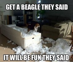 Beagle! Glad my Beagle isn't like this!