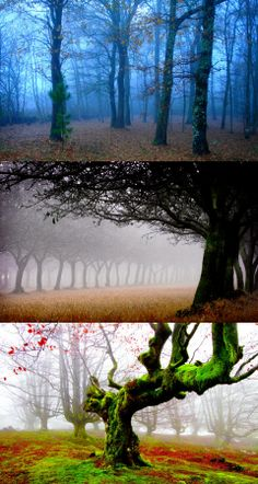 Forest of Fog and Moss, FOREST FOG