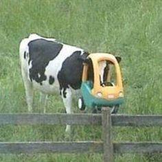 tu querer compartir icons tu venir a etiquetar # De Todo # amreading # books # wattpad Memes Lol, Cute Memes, Stupid Memes, Stupid Funny, Haha Funny, Funny Memes, Cute Cows, Cute Funny Animals, Reaction Pictures