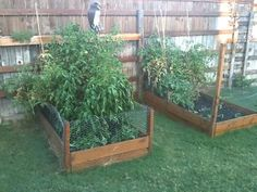 easy chicken wire border for raised bed to keep out pets. Could work for deer too? Use around whole raised bed area, add chicken wire over top too?